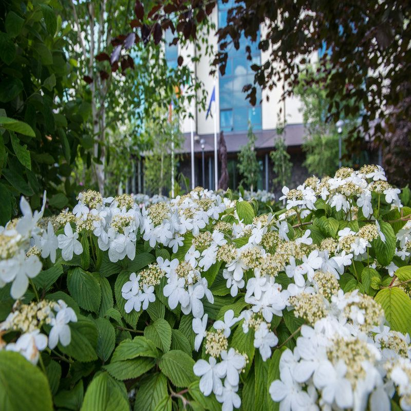rsz_white_flowers_with_hotel_in_background
